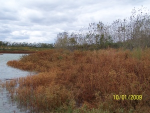 Look at all the flooded vegetation!  That is great fish habitat!