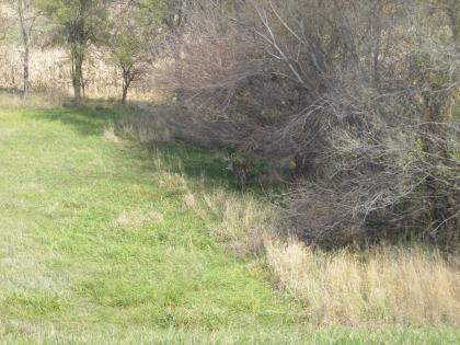 Look close, there is a nice buck along the edge of the trees. It was 1:00 in the afternoon and that buck just stood there and looked at us.