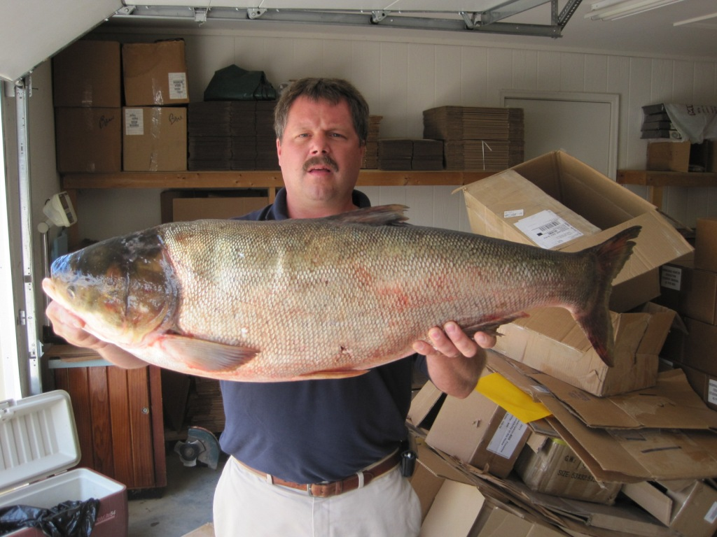 Record fish august 4 2010 barbs and backlashes for Missouri state record fish